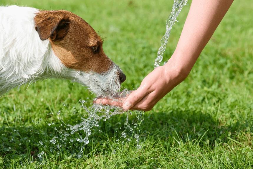 Zagrożenia w lato dla psa