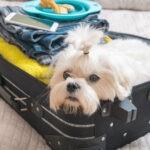 Podróże z psem – jak przygotować się do wyjazdu z psem za granicę?