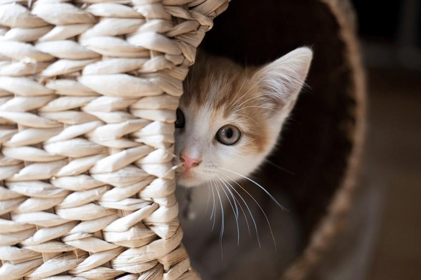 Jak przygotować się na przyjęcie małego kota w domu? Kompletny poradnik