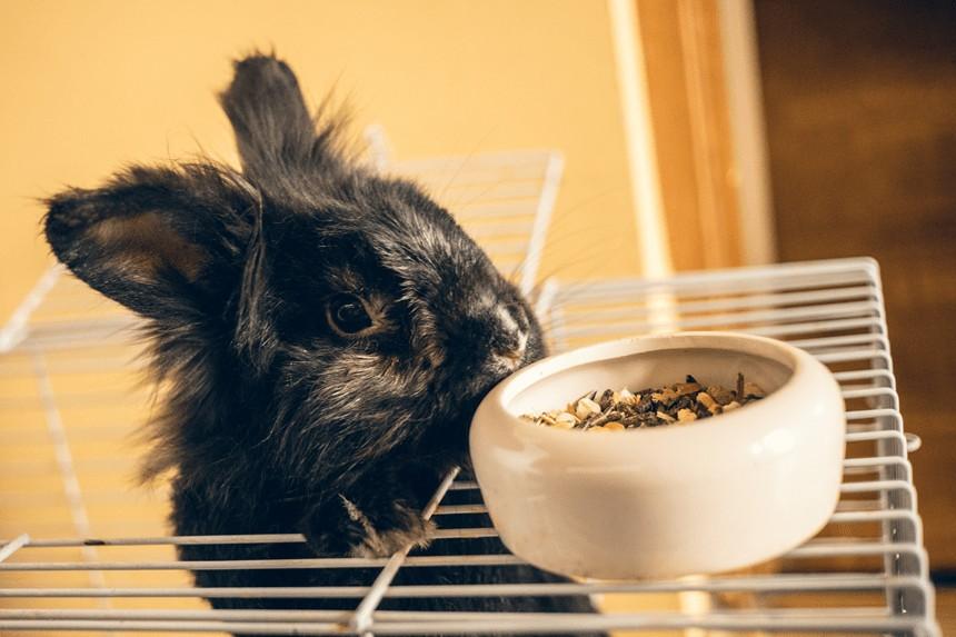 Siemię lniane dla królika – tak czy nie?