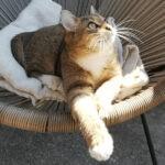 Wędka dla kota – doskonała zabawka! Tosia testuje wędkę Yarro