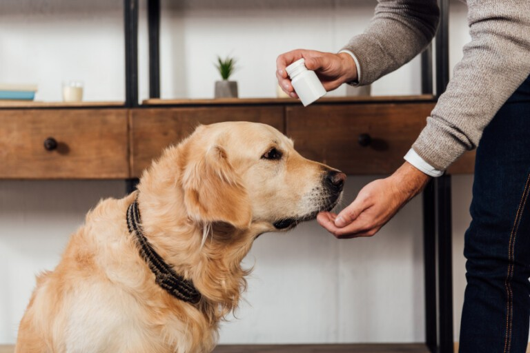 Czy tran dla psa to dobry pomysł? Dowiedz się, czy pies tego potrzebuje!