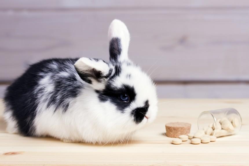 Witaminy dla zajęczaków. Jakie witaminy dla królika będą dobre?