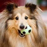 Zabawa z psem w domu – 5 najlepszych pomysłów