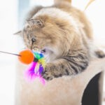 4 zabawy z kotem, które umilą czas w domu