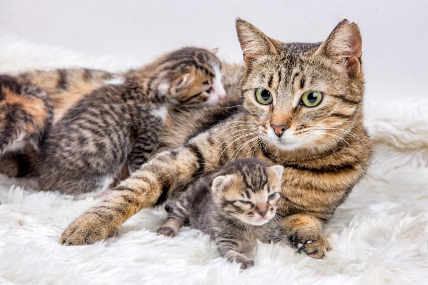czy koty mają dobrą pamieć