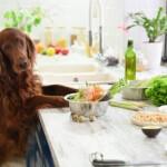 Domowe jedzenie dla psa. Przepisy, które musisz znać!