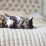 Czy spanie z kotem jest bezpieczne? Dlaczego kot śpi w Twoim łóżku? Dowiedz się!