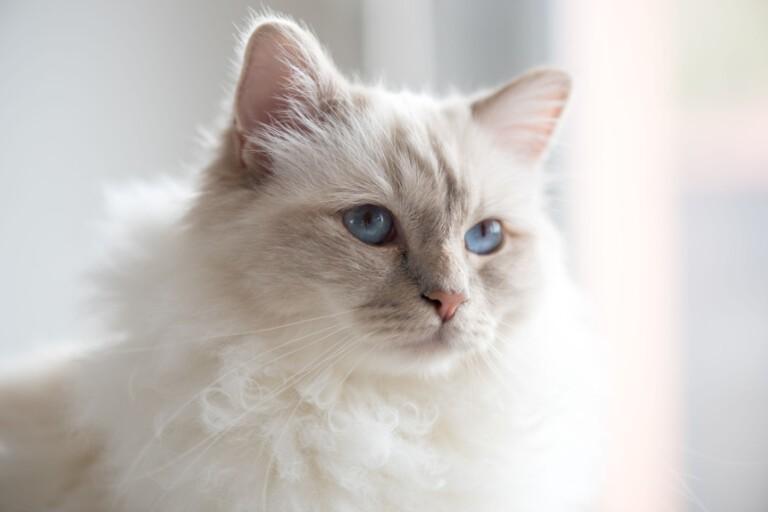 Śmierć ukochanego zwierzaka. Jak pozbierać się po stracie kota?