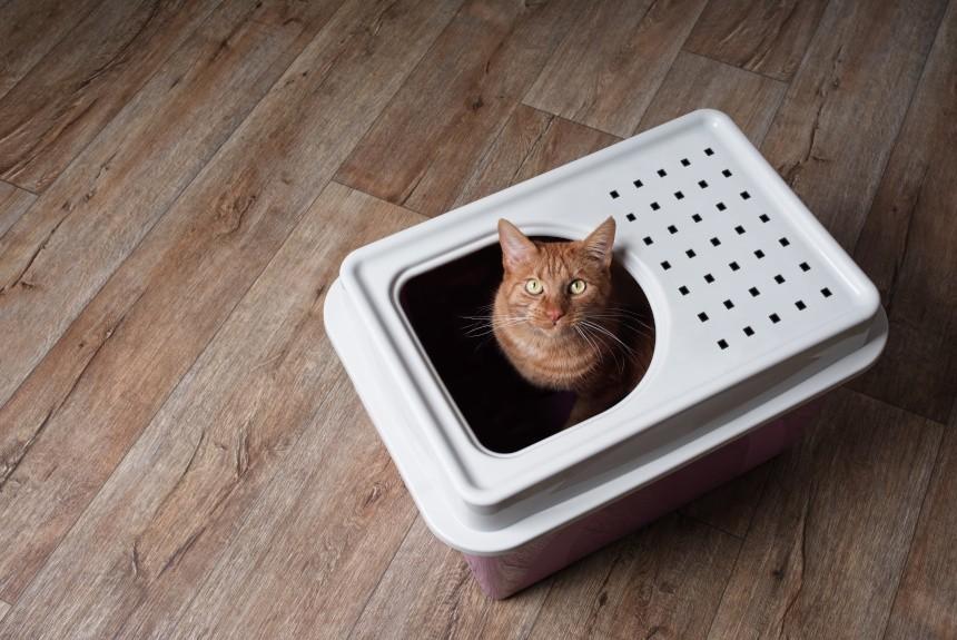 Jaka kuweta dla kota będzie najlepsza? Odpowiadamy!