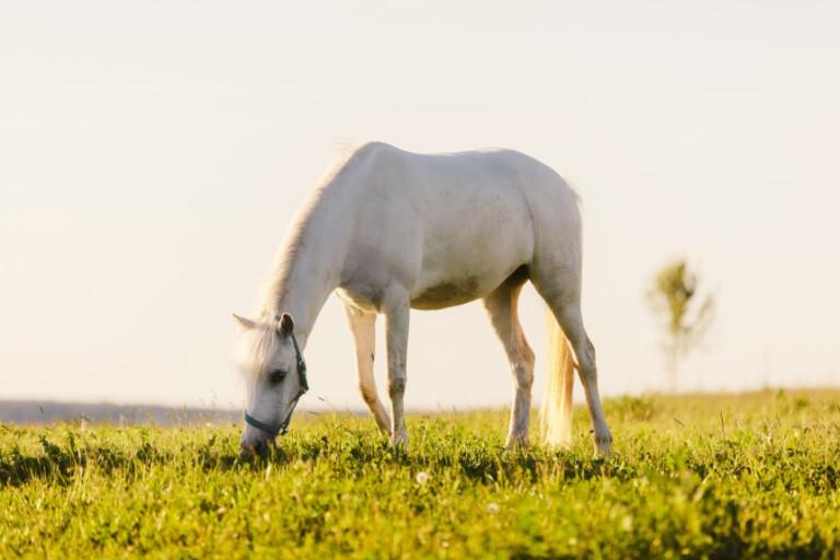 Czy suplementy dla koni to dobry pomysł? Poznaj odpowiedź!