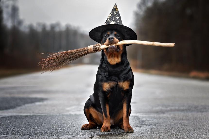 Harry Potter – imiona dla Twojego psa. Zainspiruj się!