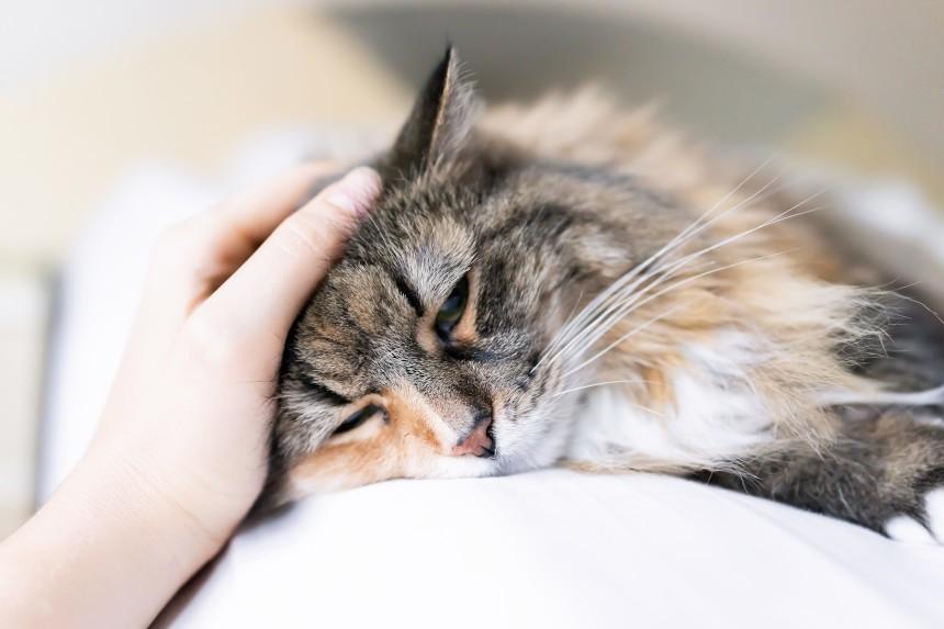 Koty nie mają 9 żyć – jak powinna wyglądać pierwsza pomoc dla kota?
