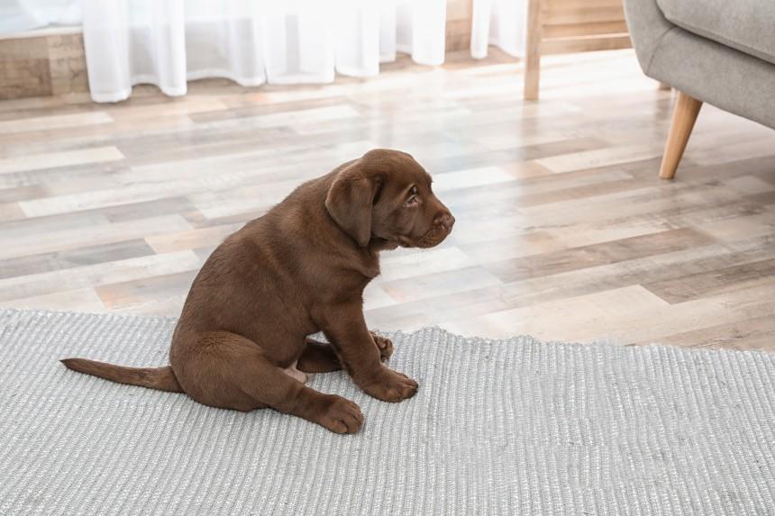 Saneczkowanie u psa. Co to znaczy i dlaczego Twój pies to robi?
