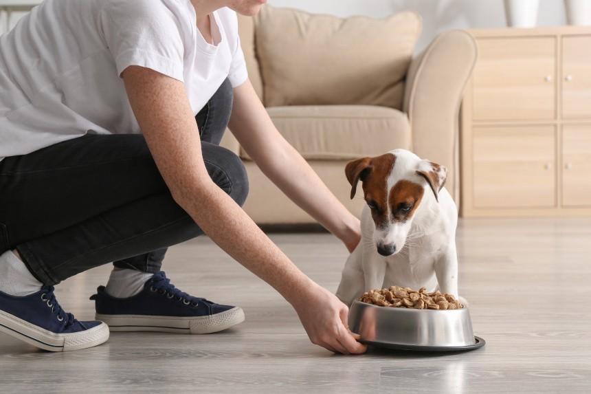 składniki karmy dla psów