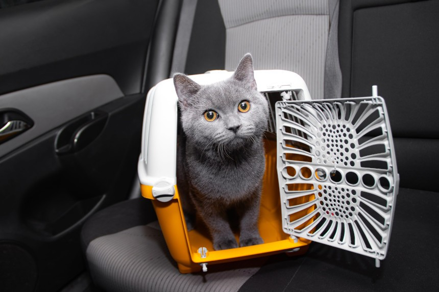 Lubisz podróżować ze swoim pupilem? Oto oryginalne rozwiązania na transport  kota!