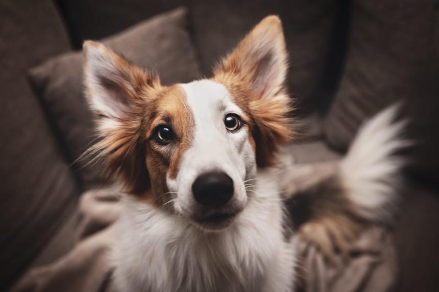 Czkawka u psa też może się zdarzyć! Dlaczego Twój pies ma czkawkę?