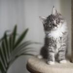 Japońskie imiona dla kota