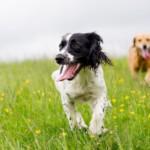 Gwizdek dla psa - czy to działa?