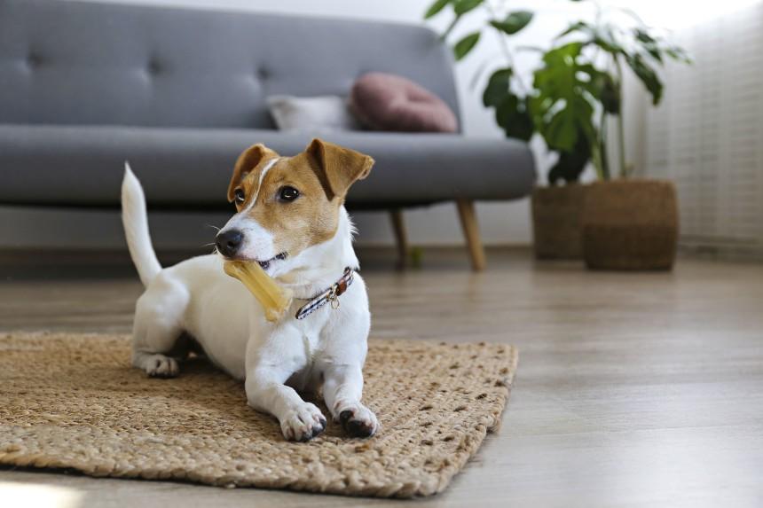 Jak wybrać gryzak dla psa? Oto nasze porady!