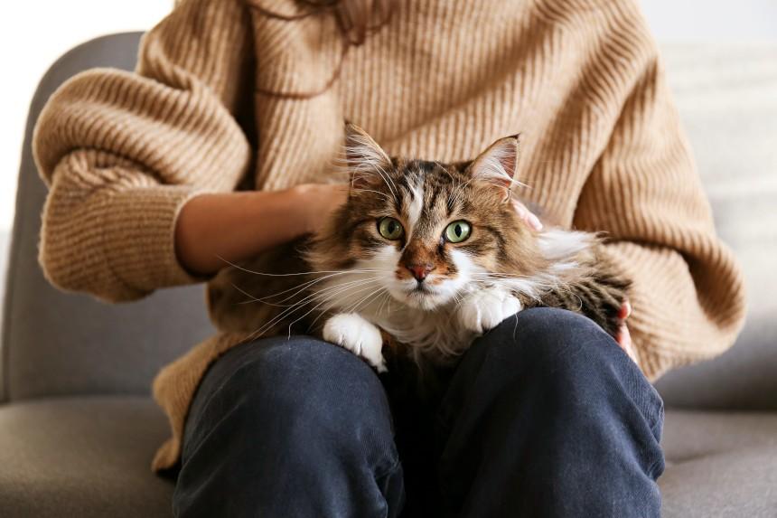 Czy strzyżenie kota jest potrzebne? Specjalista odpowiada