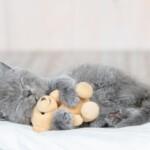 Panleukopenia kotów - co musisz wiedzieć o tej chorobie?