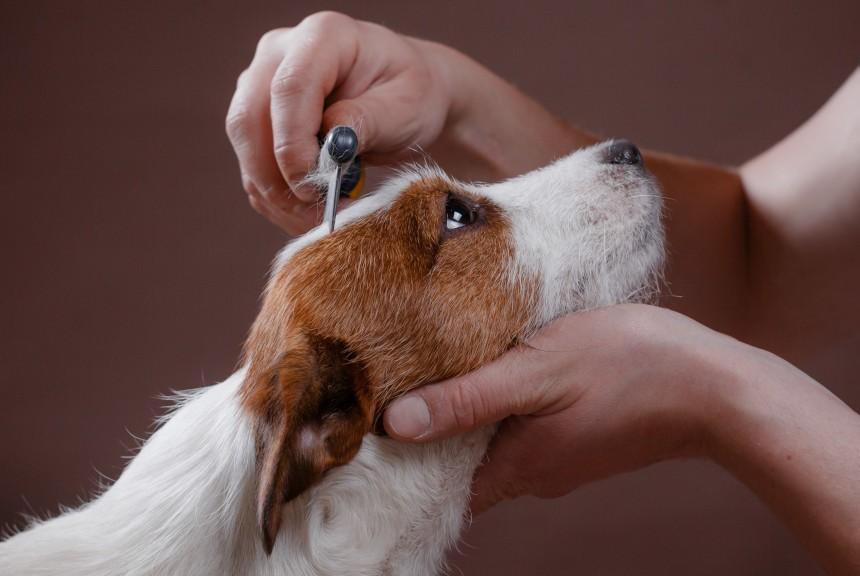 Zaobserwowałeś łupież u psa? Dowiedz się, co oznacza!