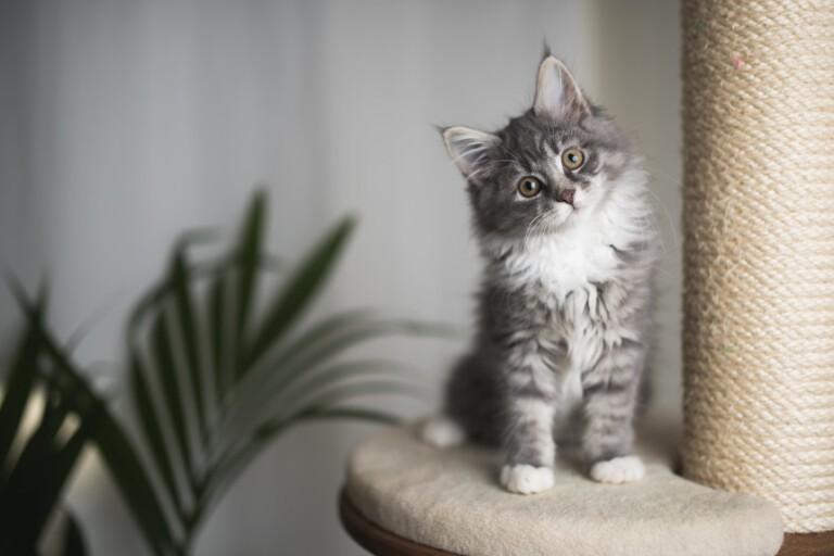 Sen o kotach. Co oznacza kot w senniku?