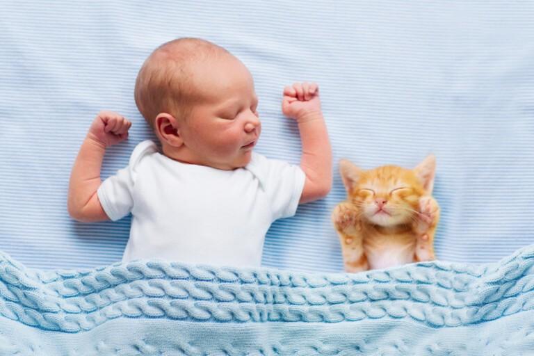 Niemowlę i kot, czyli jak przygotować kota na dziecko?