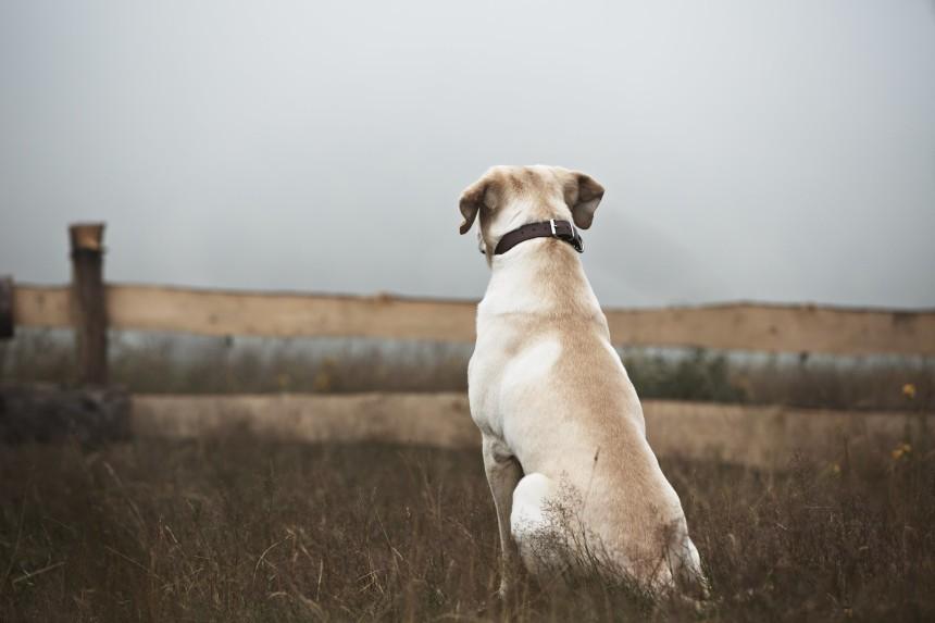Ogłoszenie o zaginięciu psa – jak i kiedy je napisać?