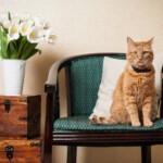 Wystawa kotów - jak się na nią przygotować?
