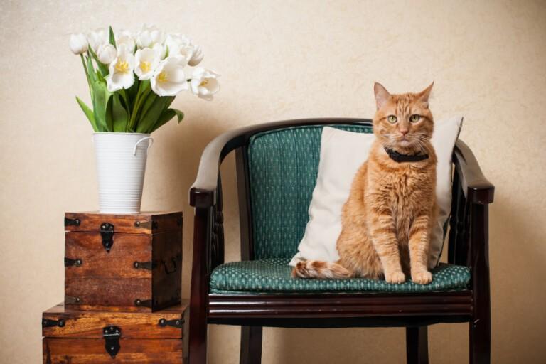 Wystawa kotów – jak się do niej przygotować?