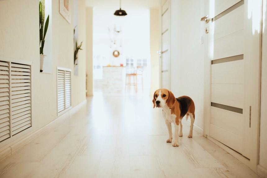 Co robi pies, jak się nudzi? 4 pomysły na zabawy dla psa samego w domu, gdy Ty idziesz do pracy