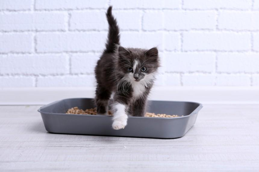 Biegunka u kota po zmianie karmy. Jak mu pomóc?