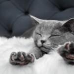 Ile koty mają palców?