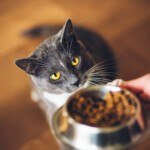 Jak powinna przebiegać zmiana karmy u kota?
