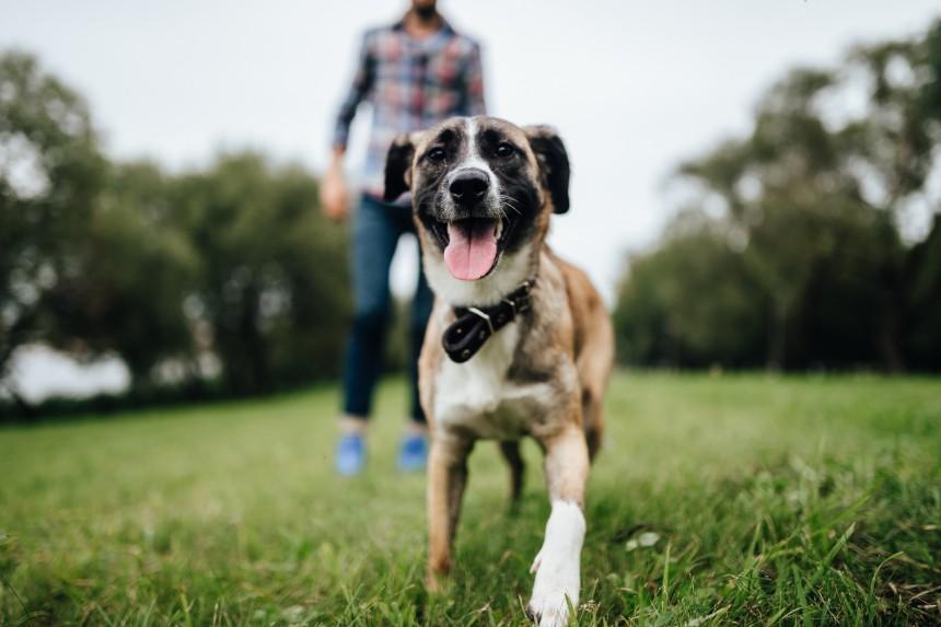 Podstawowe potrzeby psa – przeżyj z nami dzień z jego życia!