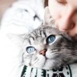 Jakie są koty z niebieskimi oczami?