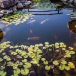 Ryby do oczka wodnego - zainspiruj się!