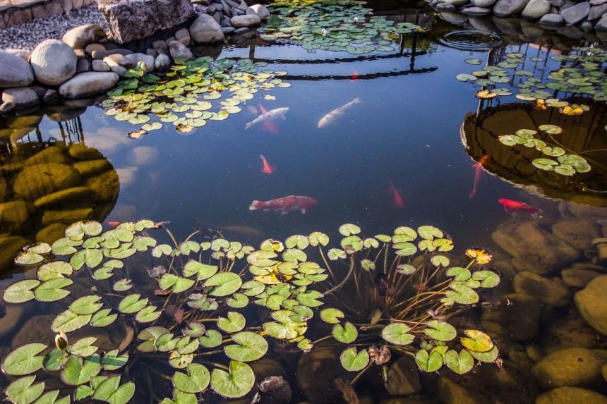 Ryby do oczka wodnego – zainspiruj się!