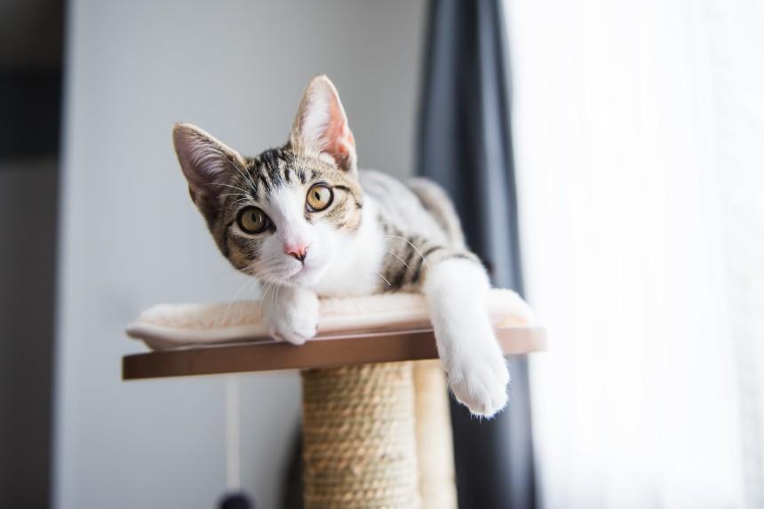 Jak zrobić drapak dla kota? Zrób to z ZooArt!