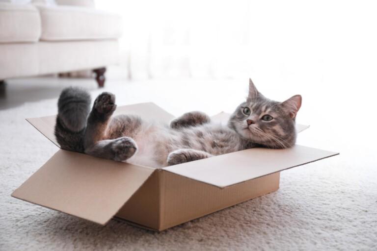 Buda dla kota – czy jest konieczna? Kiedy się przyda?