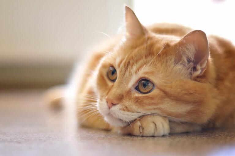 Czkawka u kota – to normalne? Co może ją powodować?