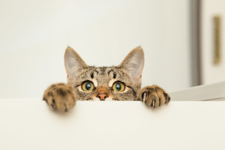 Mruczek pcha się tam, gdzie nie powinien – jak odstraszyć koty?