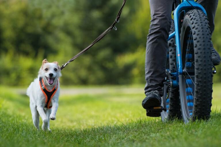 Aktywny pies – na rowerze z opiekunem! O czym pamiętać?