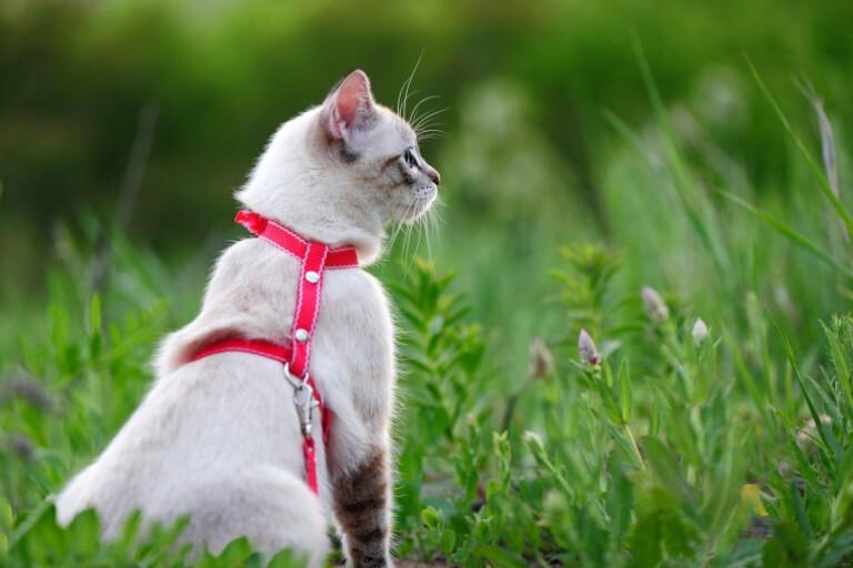Jakie szelki dla kota wybrać? Podpowiadamy!