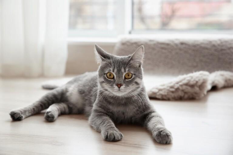 Ubezpieczenie kota – wszystko, co musisz o nim wiedzieć