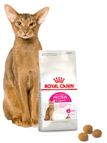 royal canin exigent protein preference karma sucha dla kot w doros ych wybrednych kieruj cych. Black Bedroom Furniture Sets. Home Design Ideas
