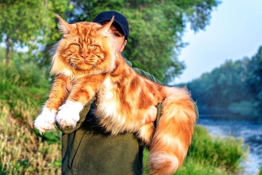 Zdjęcia dużych kotów