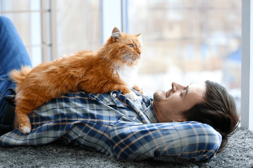 Dlaczego Kot Kładzie Się Na Klatce Piersiowej Człowieka Blog